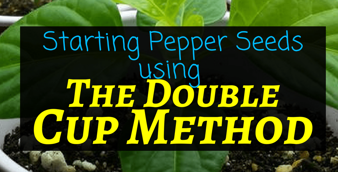 How to start pepper seeds: The Double Cup Method