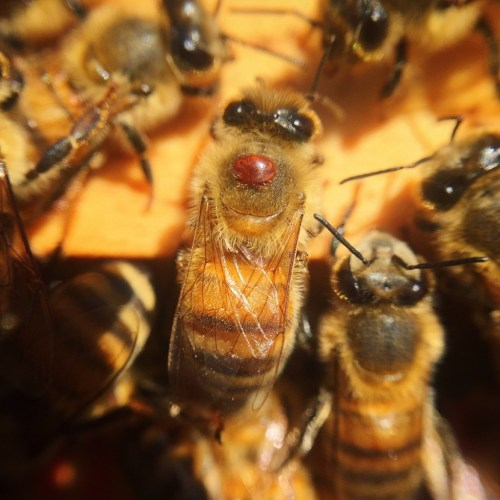 HOW TO MITIGATE THE NEGATIVE IMPACTS OF BEEKEEPING