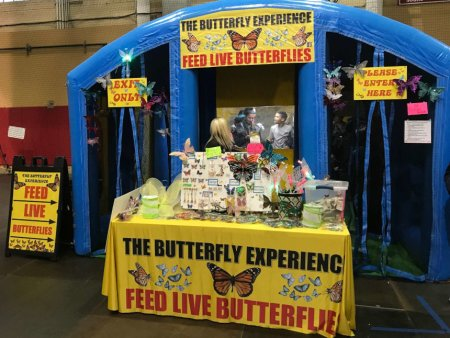 the-butterfly-experience-butterfly-show