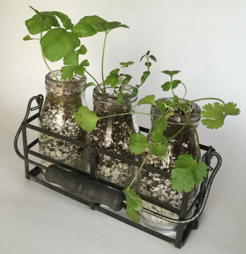 milkbottle-herb-garden-kit