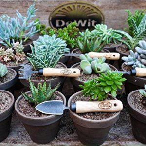 DeWit Bonsai Tool Kit in Wooden Box DeWit Bonsai Tool Kit in Wooden Box.