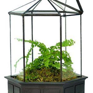 H Potter Glass Terrarium Succulent Planter Wardian Case Plant Container