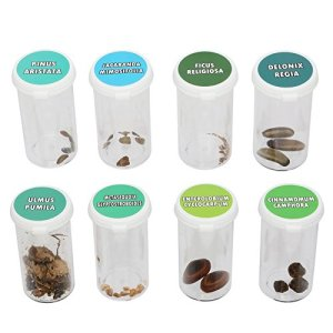 Bonsai Tree Seed Kit | Grow Bonzai at Home | Set of 8 Stay Fresh Vials with Rare Bonsi Seeds | Delonix Regia (Flame Tree), Jacaranda, Metasequoia (Dawn Redwood), and Many More!