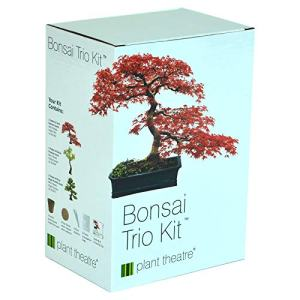 Plant Theatre Bonsai Trio Kit, 3 Distinctive Bonsai Trees to Grow