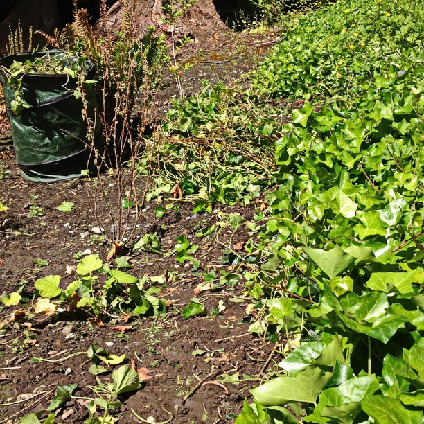 Illustrate Ivy Removal