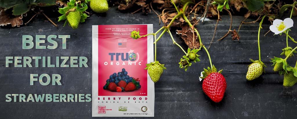 Top Five Best Fertilizers for Strawberries
