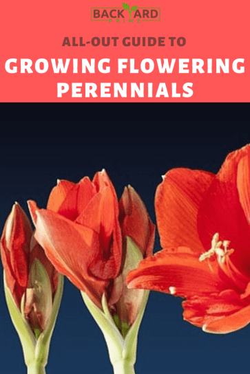 Your All-Out Guide to Growing Flowering Perennials for a Shade Garden 5