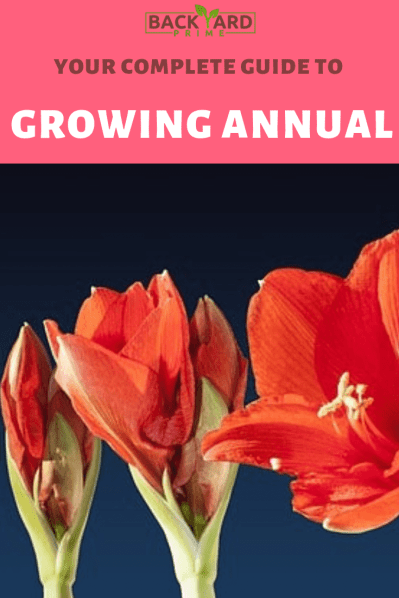 Your Complete Guide to Growing Annual Flowering Plants in Your Backyard 6
