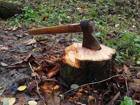 This is How You Can Easily Remove a Tree Stump 1