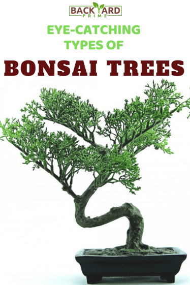 Top Eye-Catching Types of Bonsai Trees 3