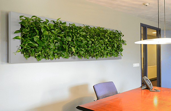 All That You Need to Know About the Living Walls Planters and Vertical Gardening? 4