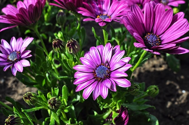 Your Complete Guide to Growing Annual Flowering Plants in Your Backyard 2