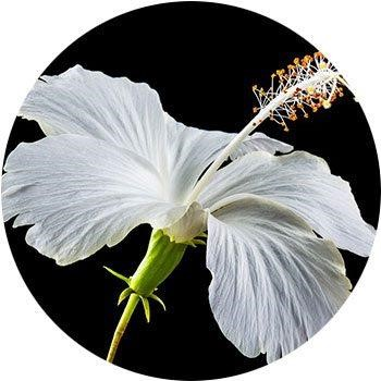20 Most Breathtaking White Flowers in The World 11