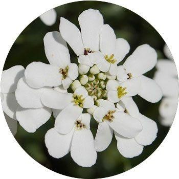 20 Most Breathtaking White Flowers in The World 18