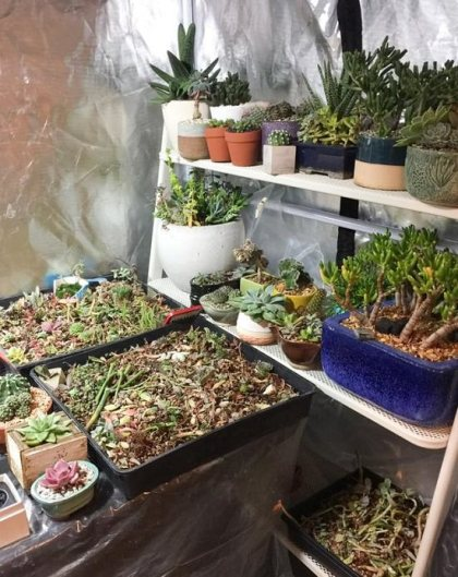 Succulents Grow Tent Setup Guide for Beginners 1