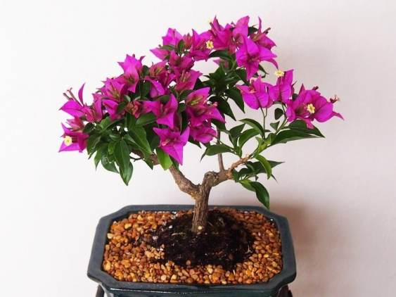Backyard Bonsai Tree