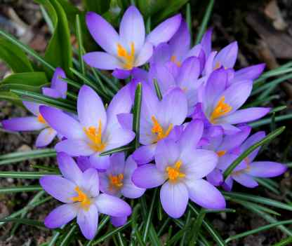 Top 9 Best Colorful Winter Plants for This Year 4