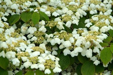 Top 9 Best Colorful Winter Plants for This Year 1