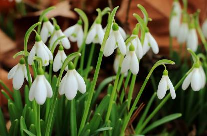 Top 9 Best Colorful Winter Plants for This Year 2