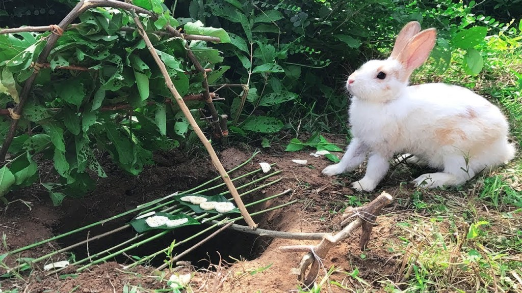 9 Easy Ways to Keep Rabbits Out of Your Garden 6