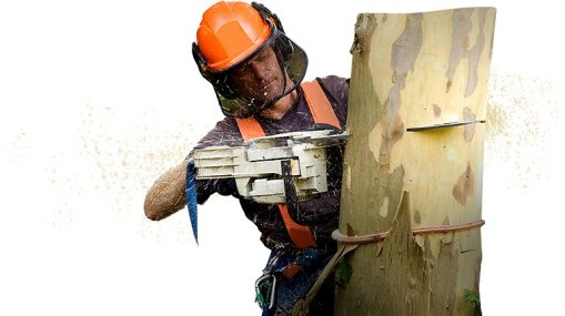 cut down a small tree safely