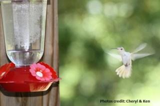 HUMMINGBIRD15