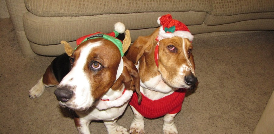 Merry Christmas from Chip & Quincy