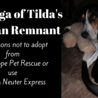 Tilda - The saga of the ovarian remnant