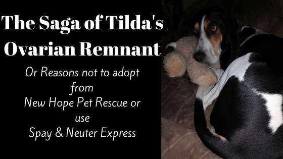 Tilda – The saga of the ovarian remnant