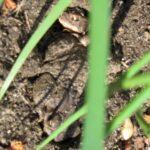 cuddly toads