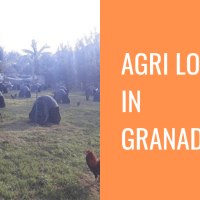 Agri Lot For Sale Rush in Granada, Bacolod