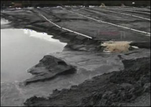 Coal ash pond at Bremo Power Station. Photo credit: CBS 19