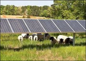 "Does mixing sheep with solar panels make a solar ""farm"" an agricultural use?"