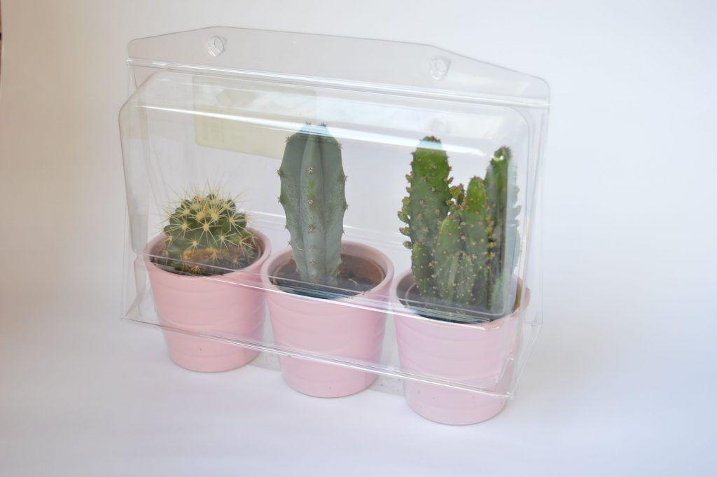 envoltorio-cactus