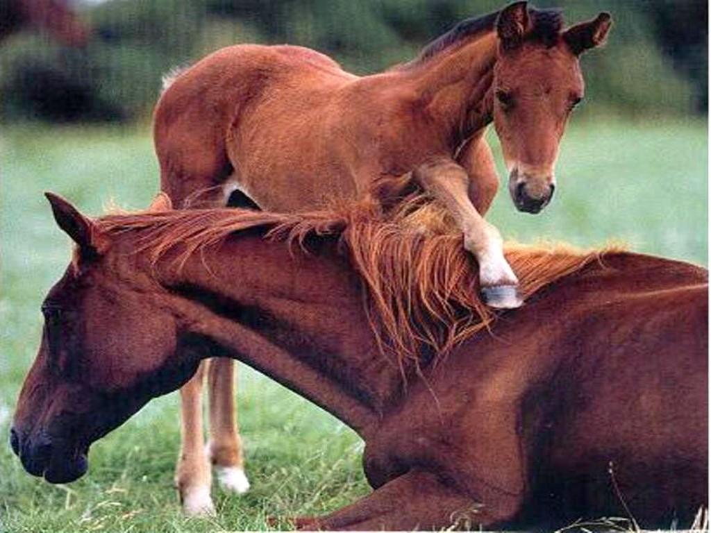 baby_horse