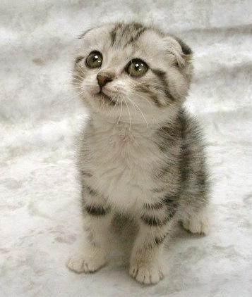 cute-cat-white