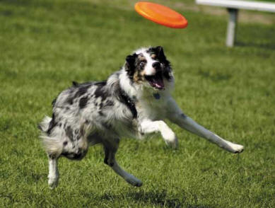 frisbee-pup