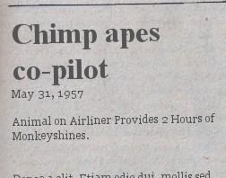 chimp apes