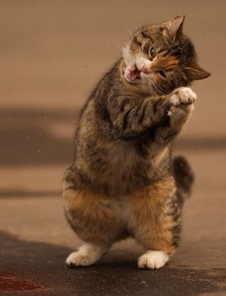 """Résultat de recherche d'images pour """"chats content"""""""