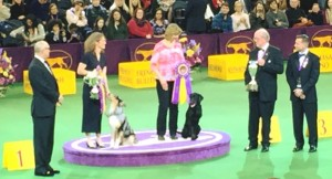 Presentation of Awards for Top Agility and Top Obedience Teams.  photo credit: Carrie DeYoung