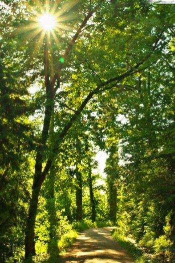 Wildgehege Baden-Baden Wald