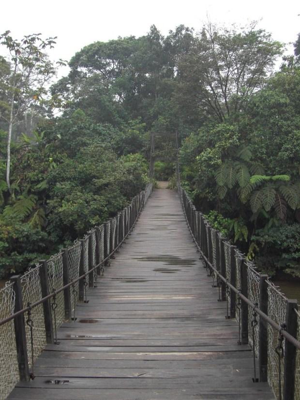 Jungle bridge - ecuador