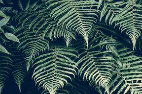The Jungle (trend) is massive