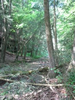 Hiking 131