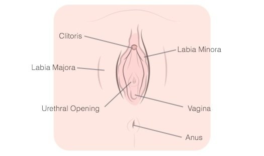 How To Finger Yourself Vagina Diagram