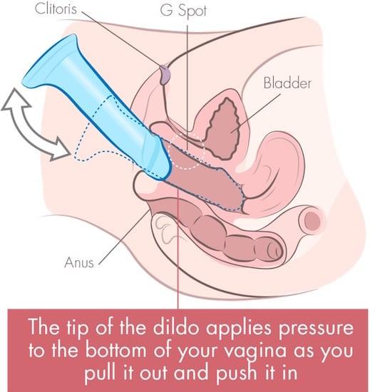 dildo on bottom of vagina cross section illustration