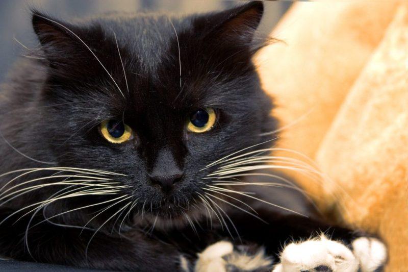 Authors Be Genuine on Social Media by @K8Tilton, cat, badredhead media