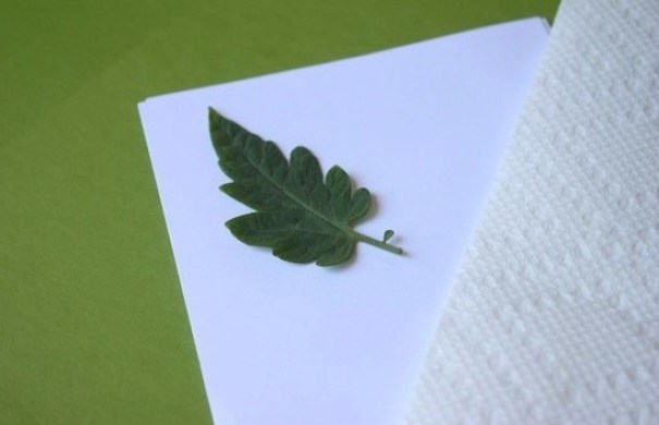DIY-Leaf-Stamp.-No-paint-required