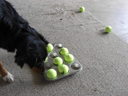 raadselspel hond