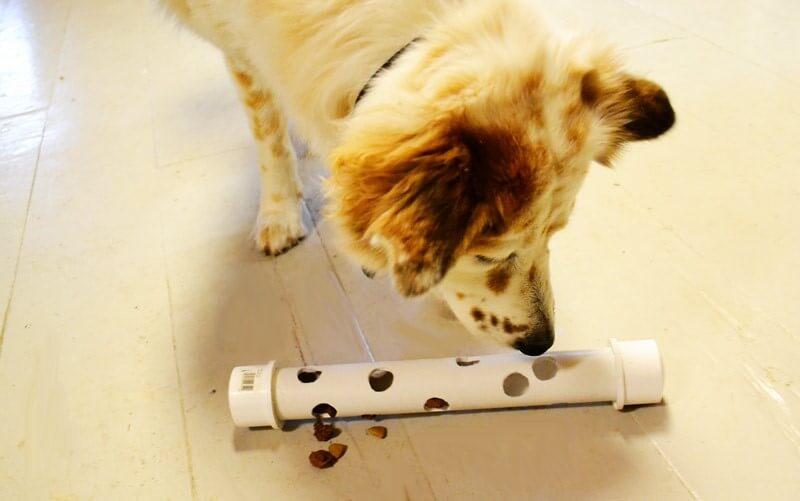 5 creatieve hondenspeeltjes met snacks